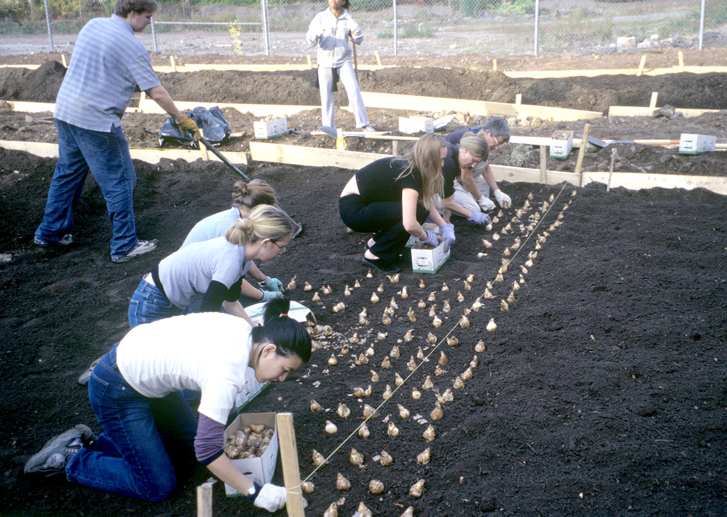 Volunteers Planting Bulbs For The 9-11 Tribute 2002
