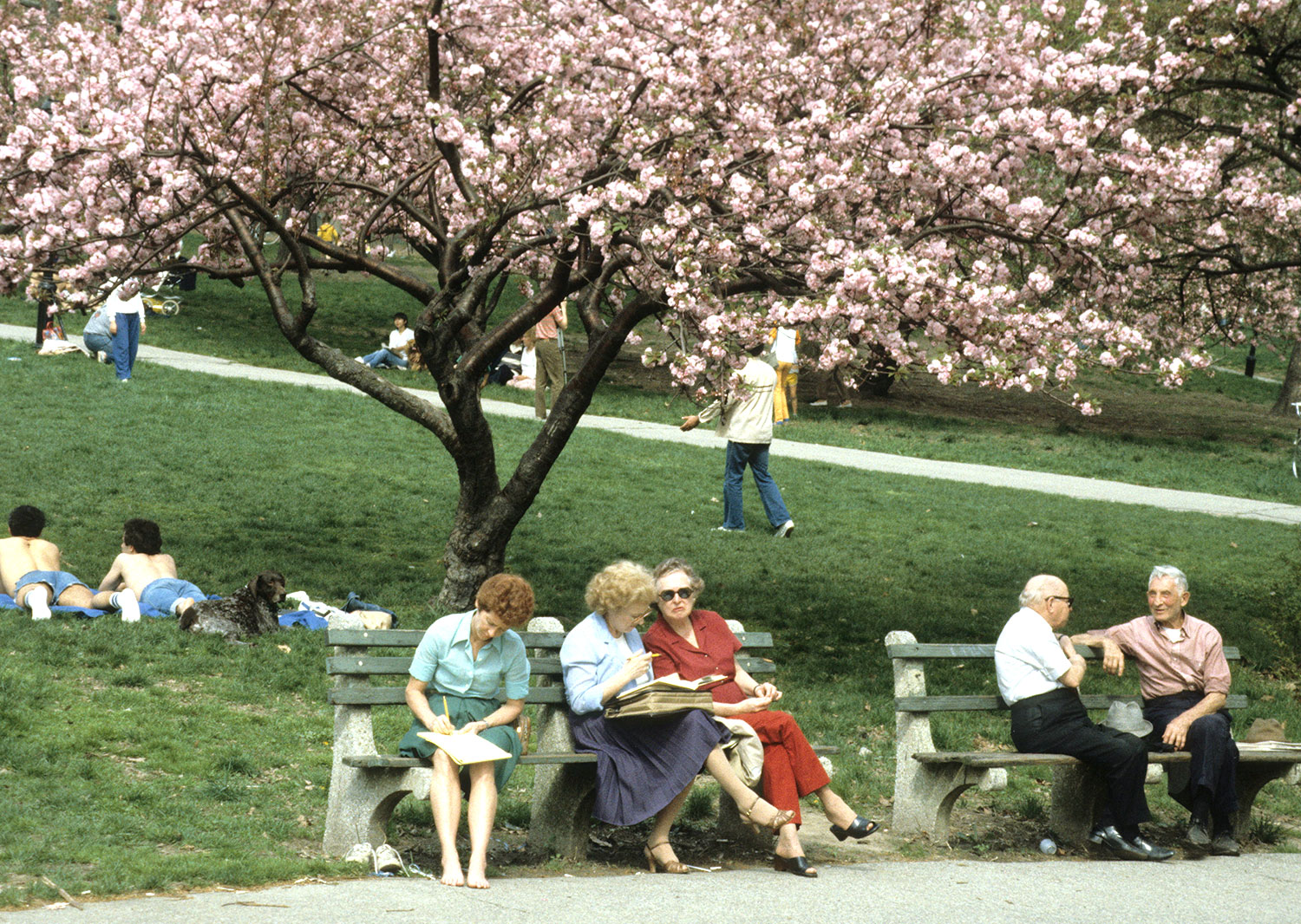 Sitting Under The Trees In Central Park 1983